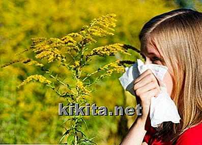 10 Slechtste Planten Voor Allergielijders Nlkikitanet